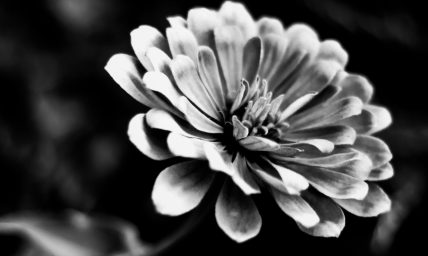 cropped-img_73112.jpg